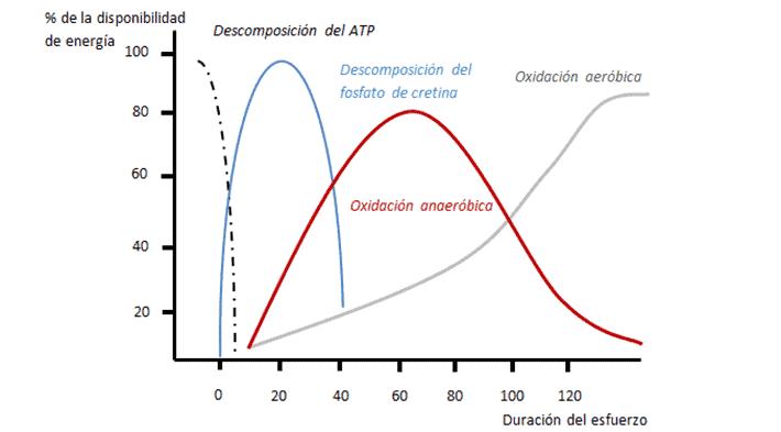 figura 2 vias metabólicas
