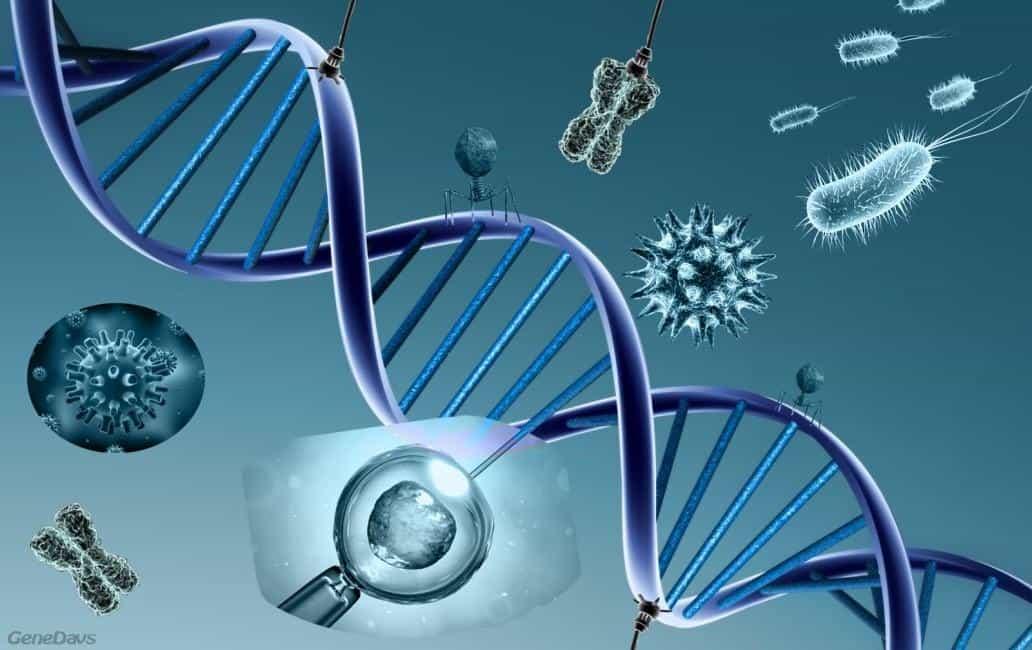 Modificacion genetica
