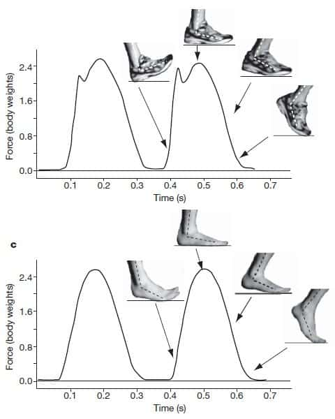 Análisis del impacto de la pisada