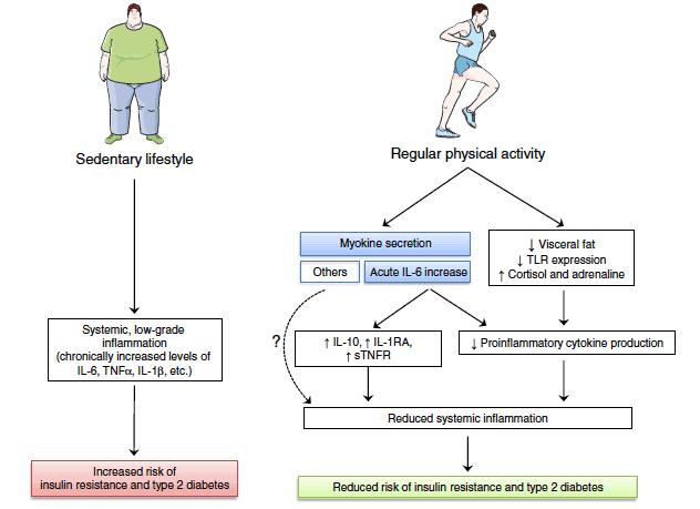 Actividad física e inflamación miokinas