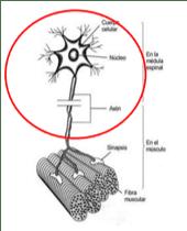Figura 1. Fatiga central.