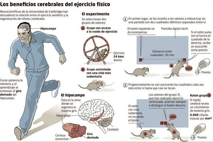 beneficios-cerebrales-ejercicio-fisico