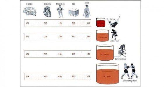 Distribución sanguínea en base a la intensidad