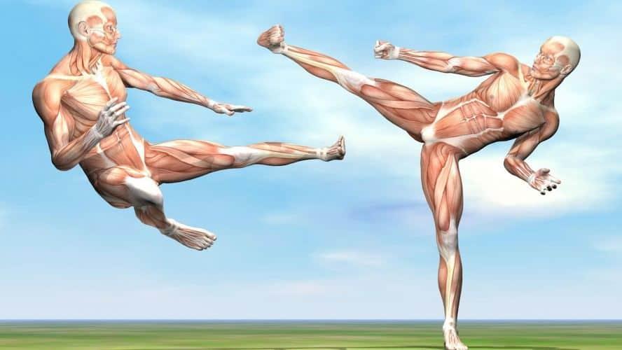 Sistemas musculares en movimiento