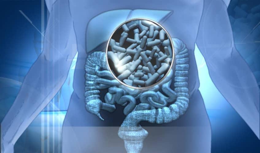 probiotico y deporte