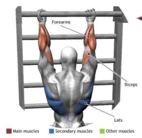 estiramiento de antebrazos y bíceps