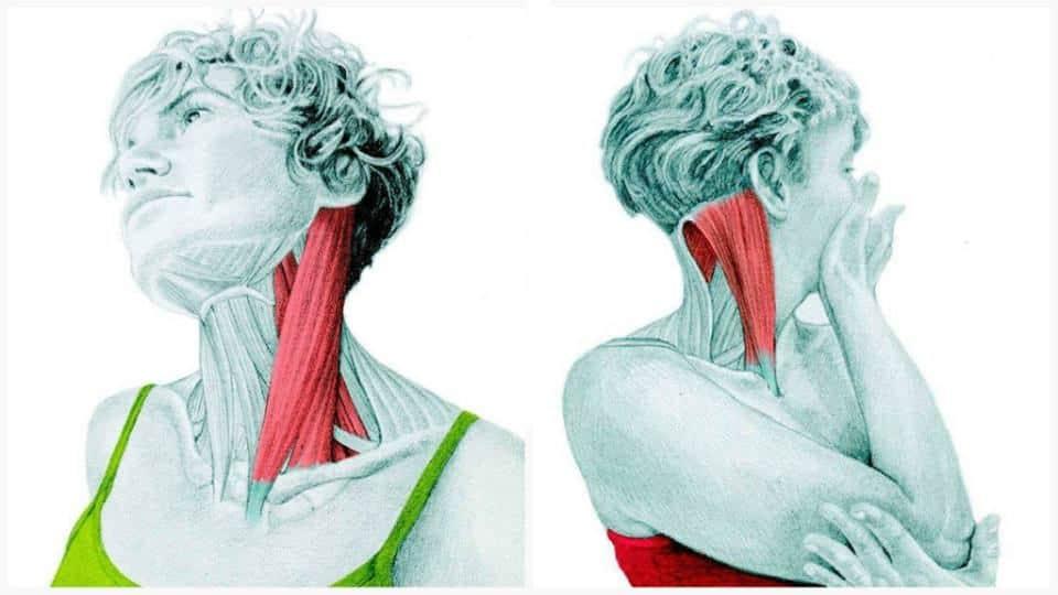 estiramientos de cuello