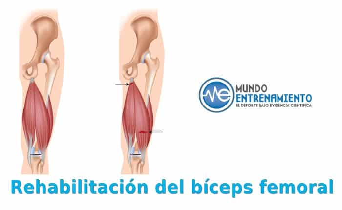 Rehabilitación bíceps femoral