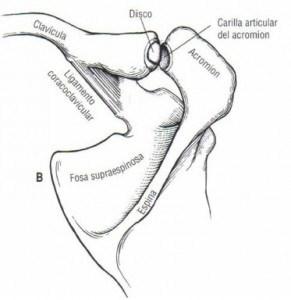 acromioclavicular