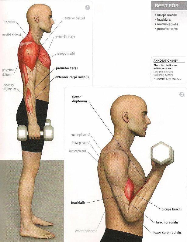biceps con mancuerna