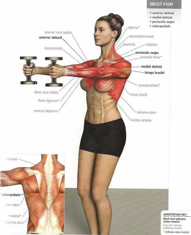 elevaciones frontales hombro