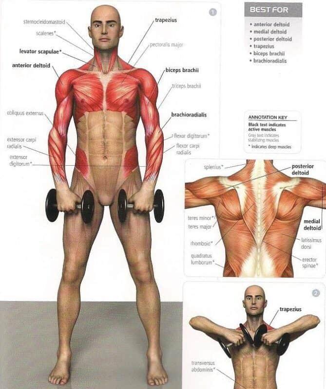 elevaciones frontales para hombro