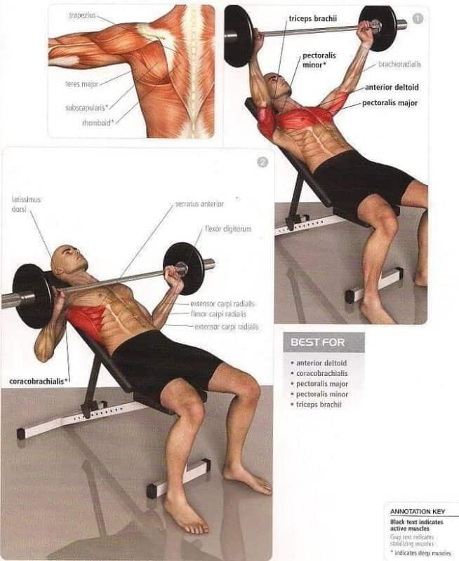 Qué músculos trabajo en cada ejercicio? | Mundo Entrenamiento