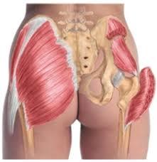 anatomia-gluteo