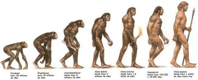 evolucion-hominidos