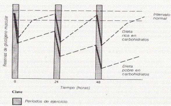 Relación de carbohidratos y glucógeno muscular