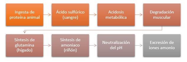 vias metabólicas incrementar masa muscular