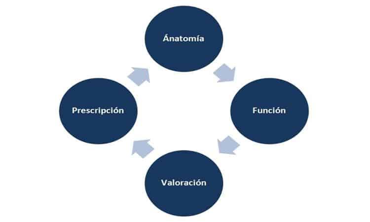 Bases sobre las que el preparador físico/entrenador personal debe prescribir ejercicio