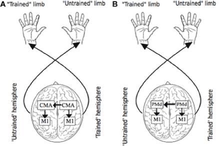 Figura 1: Concepto Cross-Transfer
