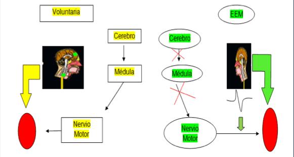 Figura 1. Elaboración Propia