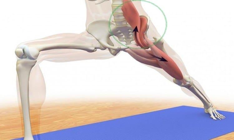 Musculatura flexora de cadera. Señalado en verde, el psoas mayor e ilíaco (5).