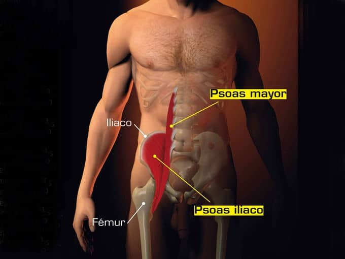psoas musculo