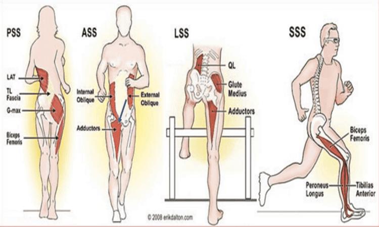 Cadenas o subsistemas musculares (5).