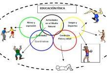 Contenidos de Educación Física