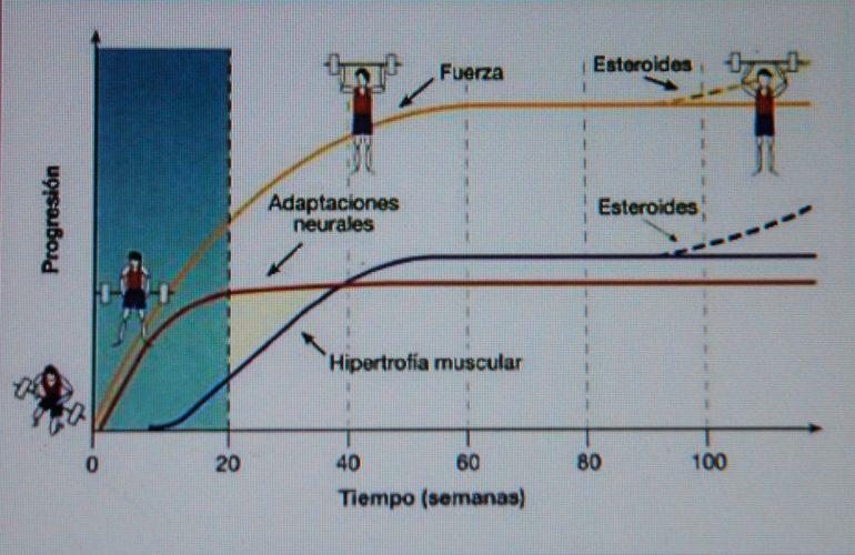 rutina de hipertrofia