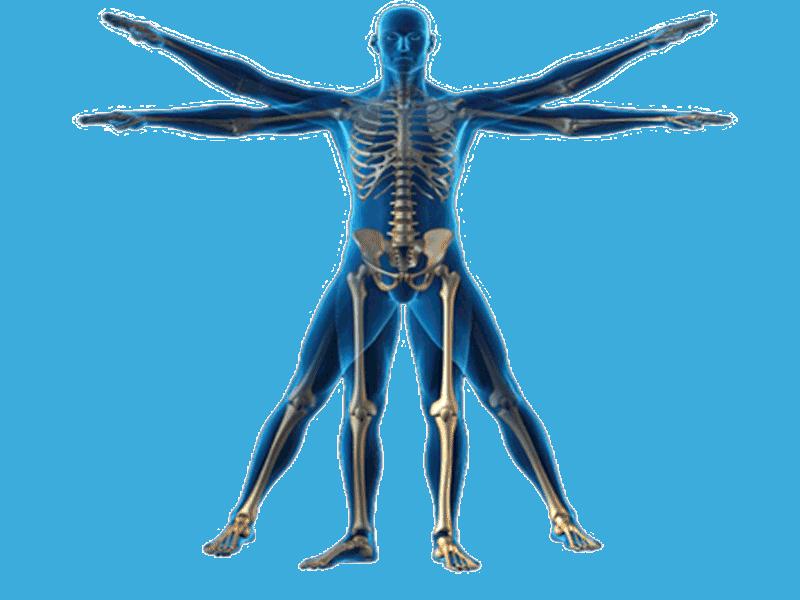 Cineantropometría, qué es y para qué sirve