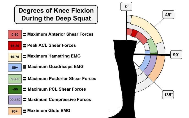 Grados de flexión de rodilla durante la sentadilla