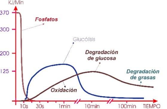vías energéticas