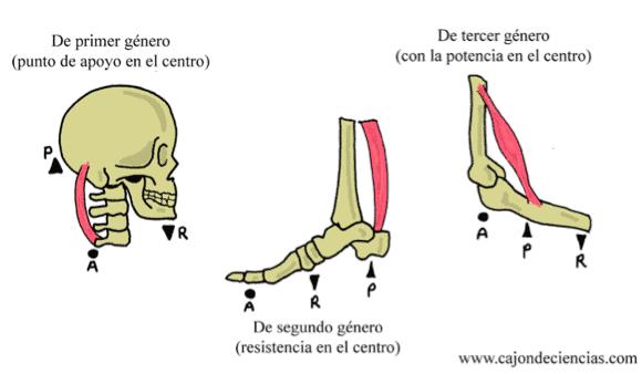 estructura imagen 2