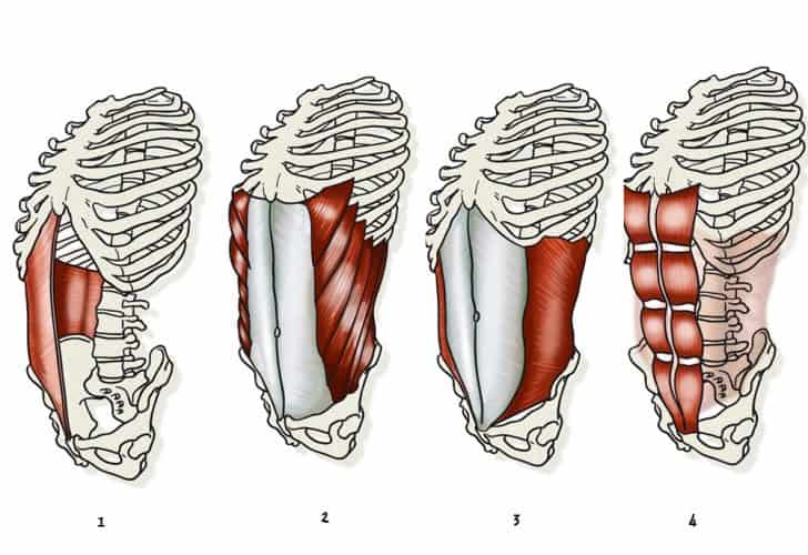 Músculos del six pack