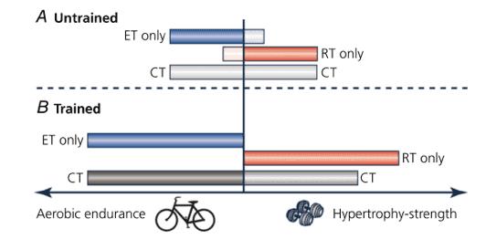 Figura 3: Gráfica de cómo mejora la resistencia con el entrenamiento enfocado a este, en personas desentrenadas y entrenadas (azul). Potencial de mejora de la fuerza con entrenamiento solo de esta (rojo) en personas entrenadas y desentrenadas. El potencial de mejora de ambas con entrenamiento concurrente en muestras entrenadas y desentrenadas (gris). (Coffey & Hawley, 2017).