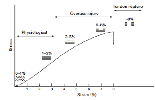 Figura 2 Corva Stress – strain para el tendón