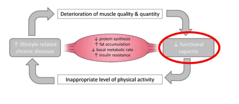 Figura 1. Deterioro del músculo esqueletico en detrimento de estímulos de fuerza. Ravenga, Javier (2018)