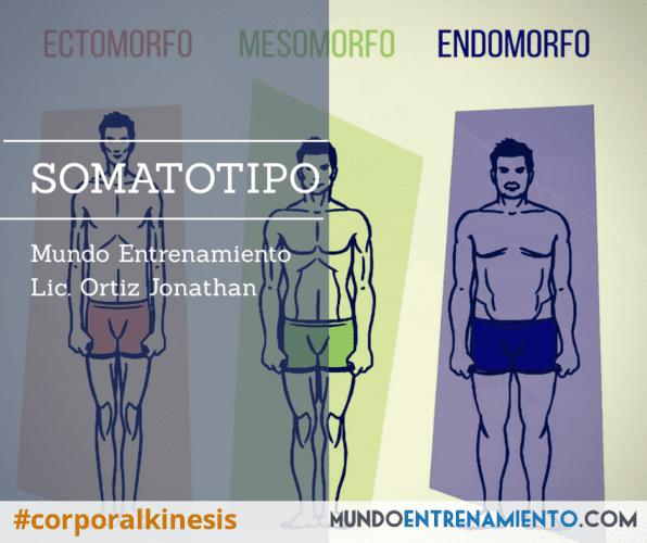 Somatotipo y su importancia.