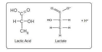 Propiedades físicas entre el ácido láctico y el lactato sódico.