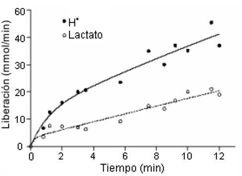 Datos de remoción de protones y lactato desde un músculo esquelético en contracción.