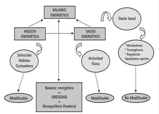 Balance energético y termogenesis