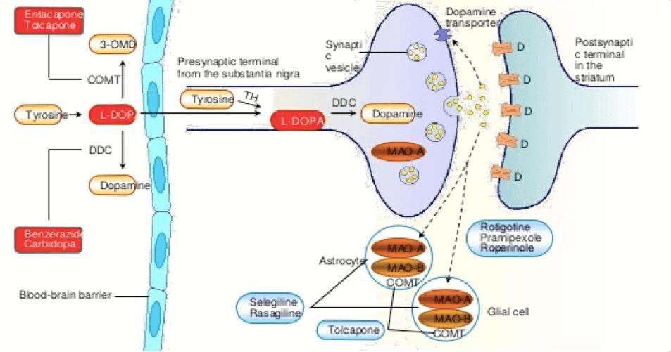 Figura 2: Herramientas farmacológicas. Salud y medicina