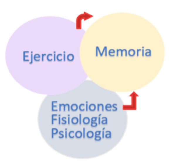 ejercicio y tareas cognitivas
