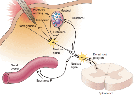 Figura 2. Mediadores químicos periféricos del dolor y de la hiperalgesia