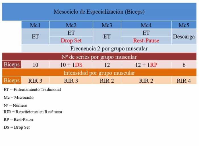 Mesociclo de Especialización (Bíceps)