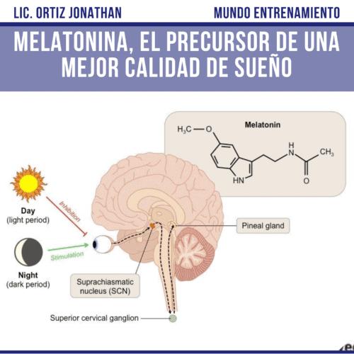 Mecanismo de acción de la hormona melatonina.