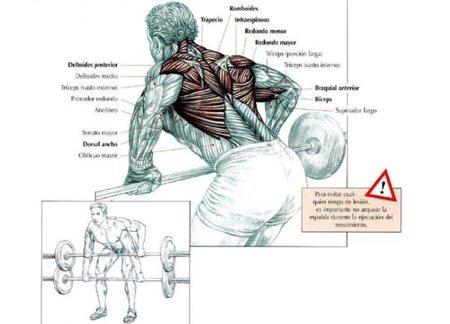 Musculatura implicada en el remo