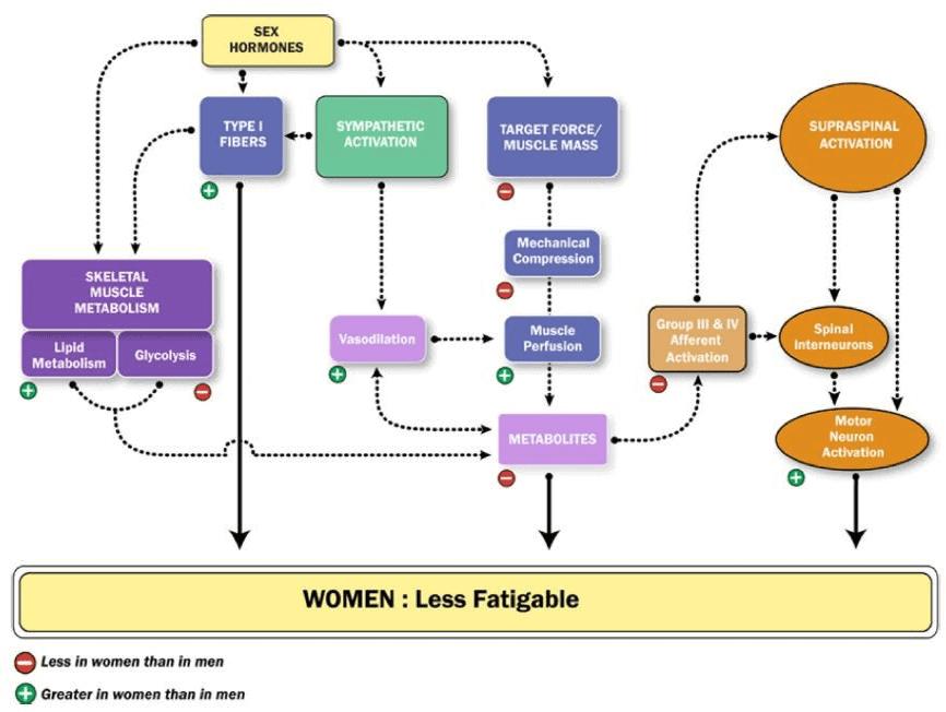 Figura 1. Diversos factores que afectan a la fatiga percibida en mujeres deportistas.