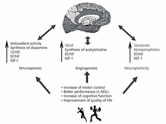 Cerebro y confinamiento: Beneficios neurológicos del ejercicio