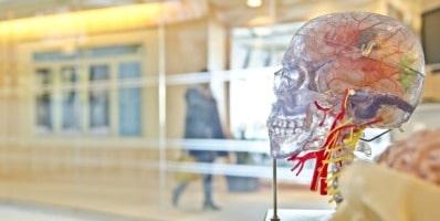 Cerebro confinamiento coronavirus